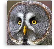Great Grey Owl Canvas Print