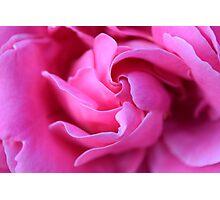 Cheeky Rose Photographic Print
