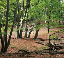 Where Forest Folk Giggle & Dance, Scamper & Prance by BettinaSchwarz