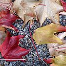 Leaves on Gravel Path by Edward Denyer