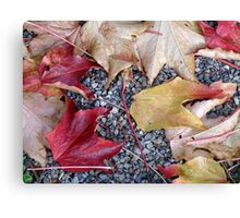 Leaves on Gravel Path Canvas Print