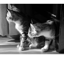 Curious Kittens Photographic Print