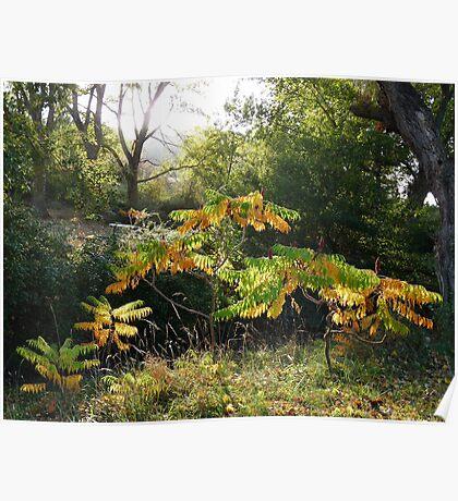 Garden Autumn Colours Poster