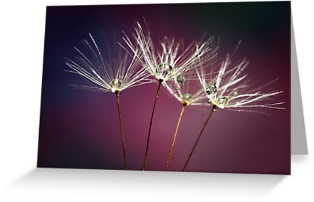 Dandelion Diamonds by Barb Leopold