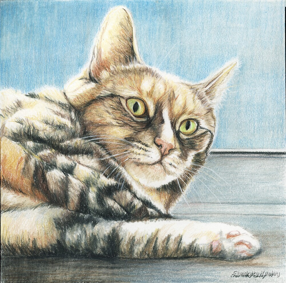 Tabby in the Sun by Charlotte Yealey