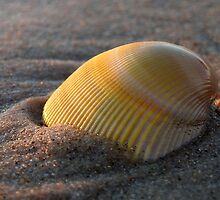 Shell by Paula McManus
