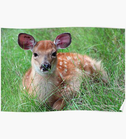 A Baby Fawn Poster