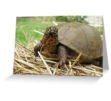 Lucky Turtle Closeup Greeting Card