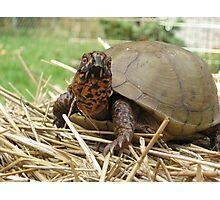 Lucky Turtle Closeup Photographic Print