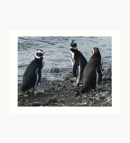 three penguins bound for sea Art Print