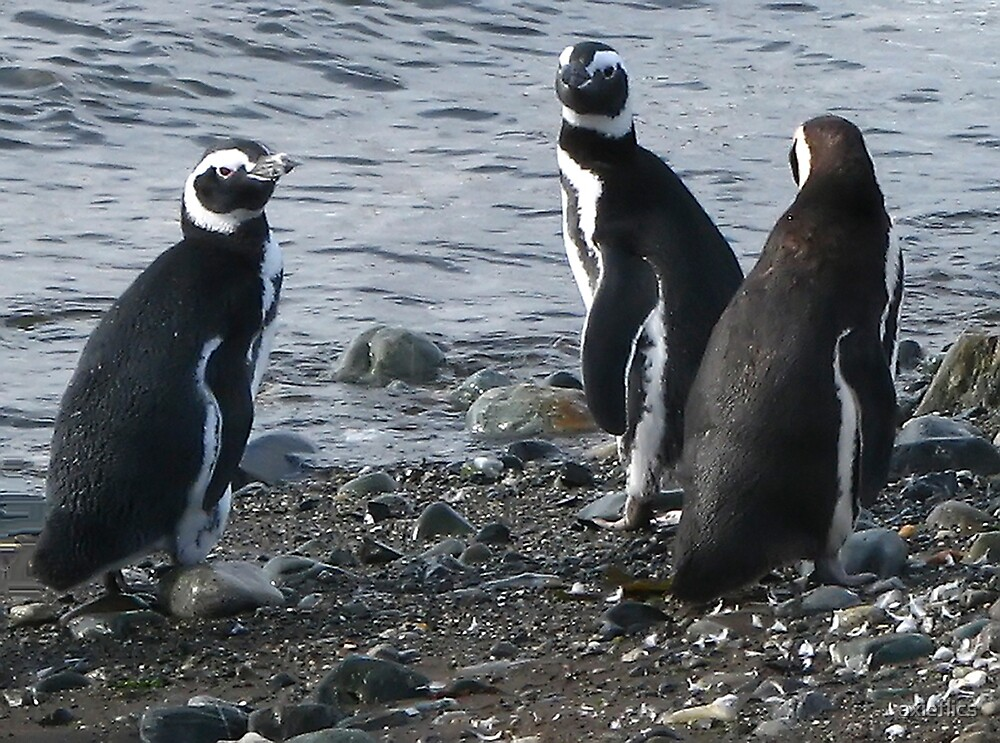 three penguins bound for sea by axieflics