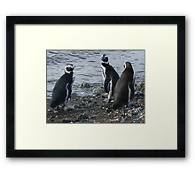 three penguins bound for sea Framed Print