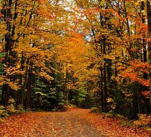 Oxtongue River Road by Nancy Barrett