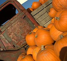 Pumpkin Patch by Shawnna Taylor