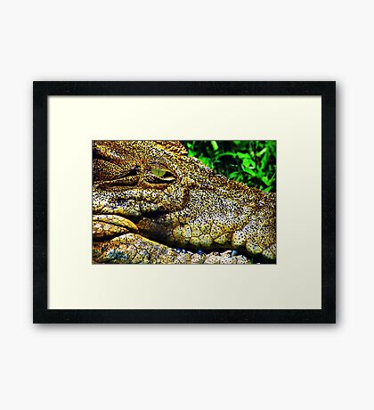 Crocodile Smile Framed Print