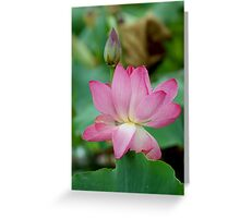 The Lovely Lotus - Mareeba Wetlands Greeting Card