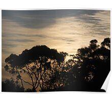 Feathered Morning Skies Poster