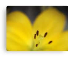 Yellow Stamen with Lensbaby  Canvas Print