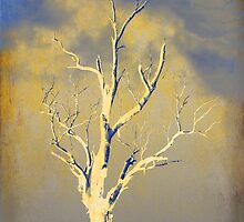 Portrait of a Tree by Chris Armytage™