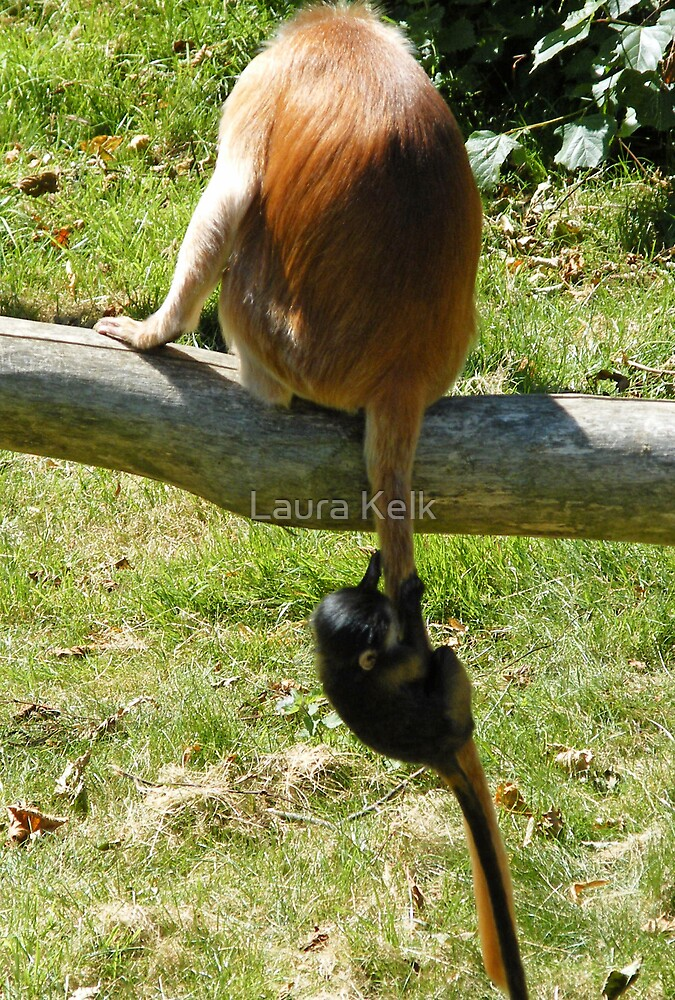 Learning the ropes... or should I say tails? by Laura Kelk