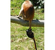 Learning the ropes... or should I say tails? Photographic Print