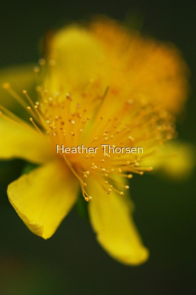 Soft focus by Heather Thorsen