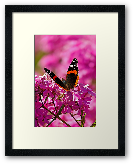 Butterfly-3 by Curtis  Sheppard