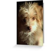 Dog of a Thousand Faces Greeting Card