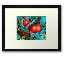 Ripe Red Tomatoes Framed Print