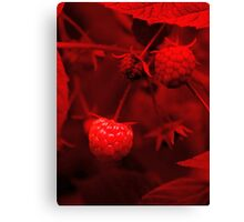 red berry Canvas Print