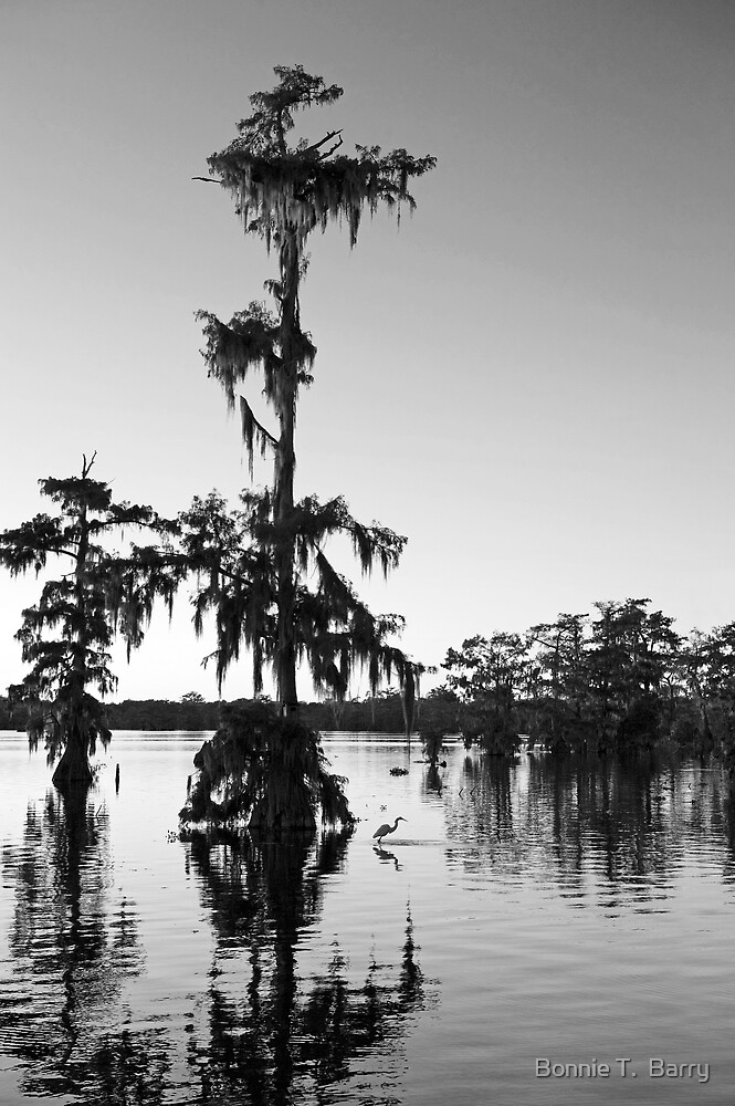 Egret under Cypress at Sunset by Bonnie T.  Barry