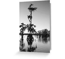 Egret under Cypress at Sunset Greeting Card
