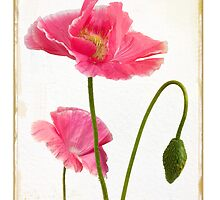 Shirley Poppy Antiqued Botanical — card by Leslie Nicole