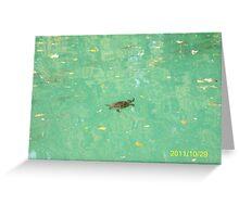 Una tartaruga nel Laghetto di Maria Luigia...Parma - Italy - 2000 visualizz.al 30 maggio 2015 -- featured rb explore 2 febbraio 2012 --- Greeting Card