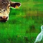 you gotta love a cow and his egret : Charolais Cattle  by Isa Rodriguez