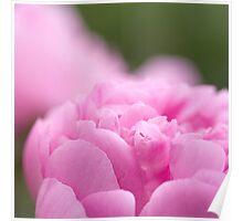 Pink Peony Poster
