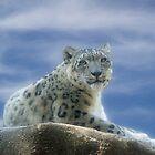 Snow Leopard II by Sandy Keeton