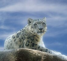 Snow Leopard II by Sandy Keeton
