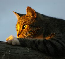 SUNSET WATCH by Helen Akerstrom Photography