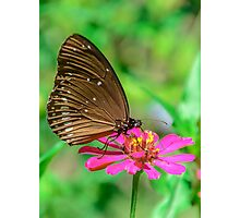 Butterfly 01 Photographic Print