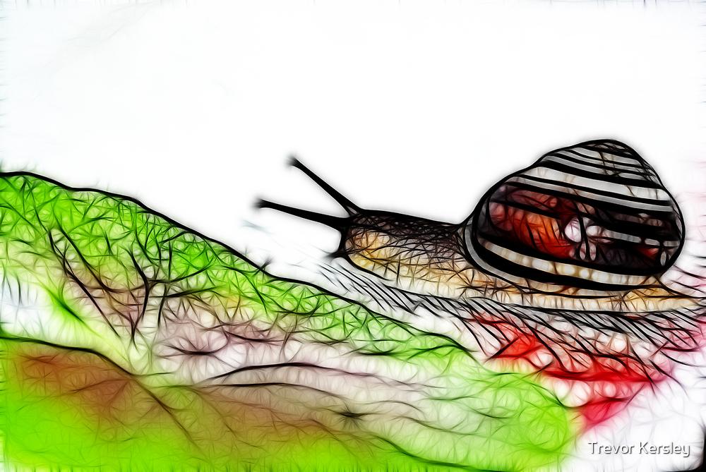 Snail & Letuce by Trevor Kersley