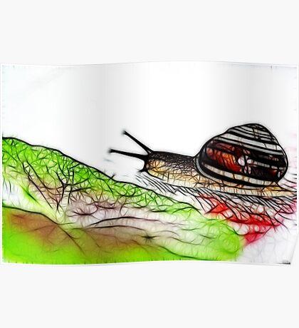 Snail & Letuce Poster
