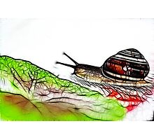 Snail & Letuce Photographic Print