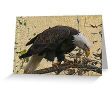 Bald Eagle Textured Greeting Card