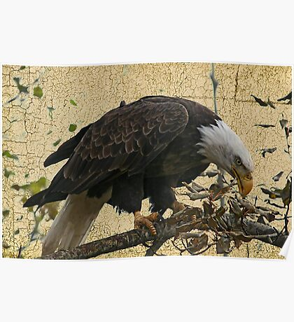 Bald Eagle Textured Poster