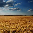 barley fields by Heath Dreger
