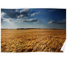 barley fields Poster