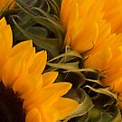 Sunflowers by Sarah-Jane Covey
