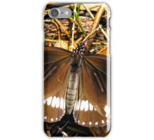 Male Australian Crow Butterfly iPhone Case/Skin