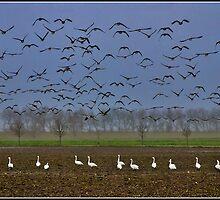 Birds Paradise by Adri  Padmos